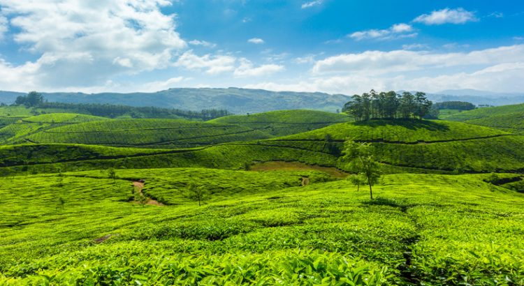 Munnar Tour Packages from Mumbai