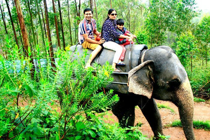 Elephant-ride-in-Munnar-compressed