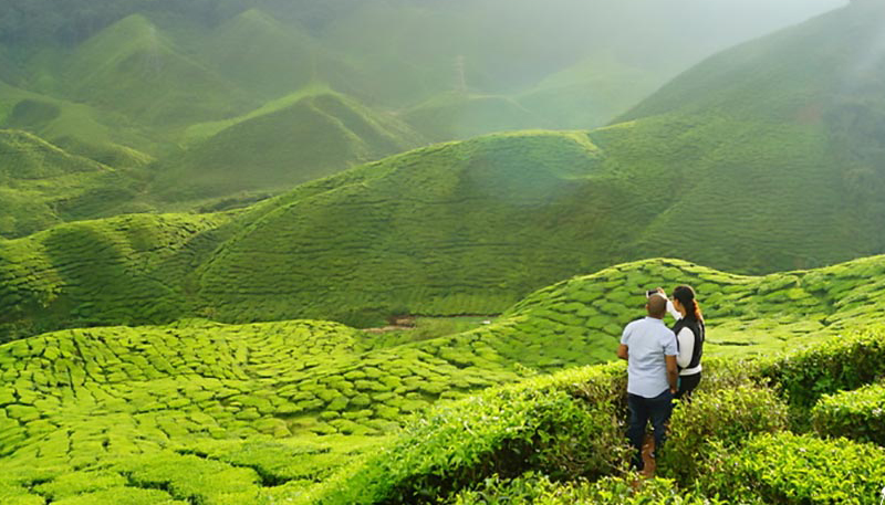 Munnar-A-Walk-at-the-Verdant-Tea-Gardens