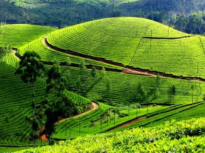 honeymoonmunnar