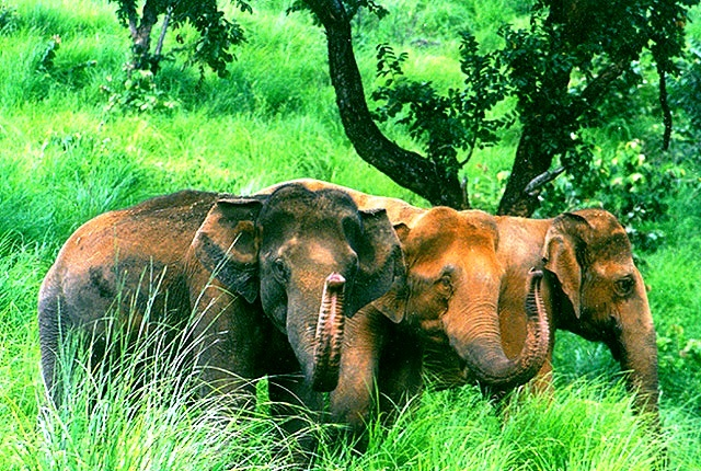 periyar-willife-sanctuary-kerala